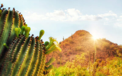 What is the best season to sell your house in Arizona?